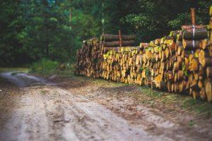Nachhaltige Forstwirschaft